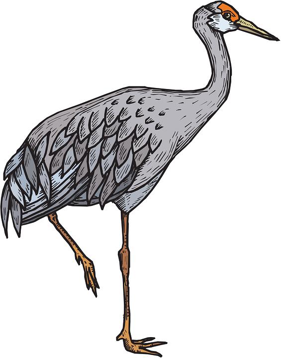 Gray Heron svg #8, Download drawings