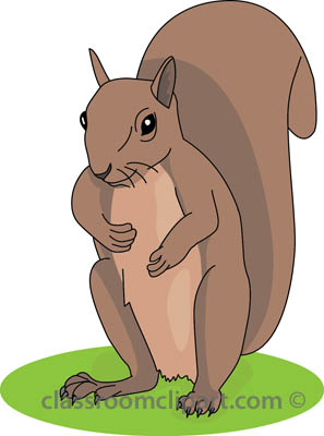 Gray Squirrel clipart #4, Download drawings