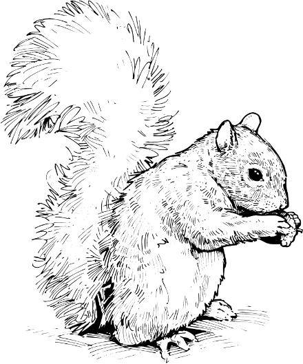 Gray Squirrel clipart #7, Download drawings