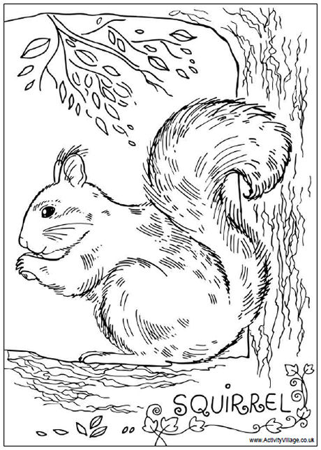 Gray Squirrel coloring #6, Download drawings