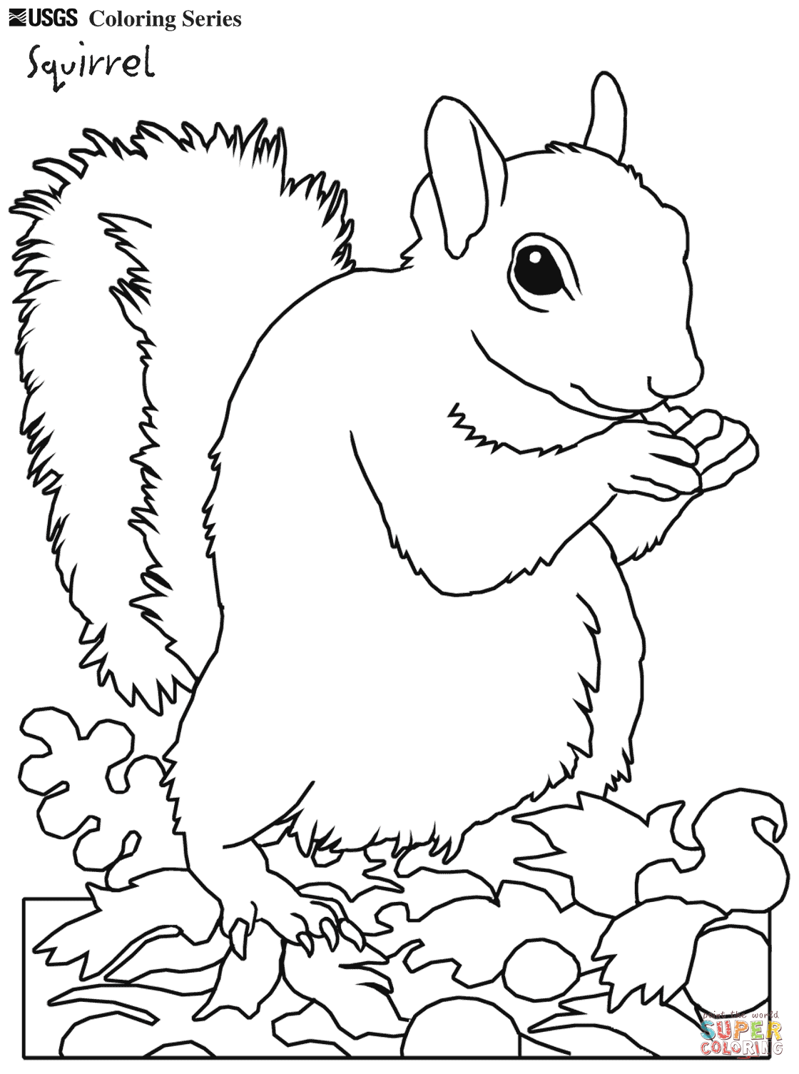 Gray Squirrel coloring #10, Download drawings