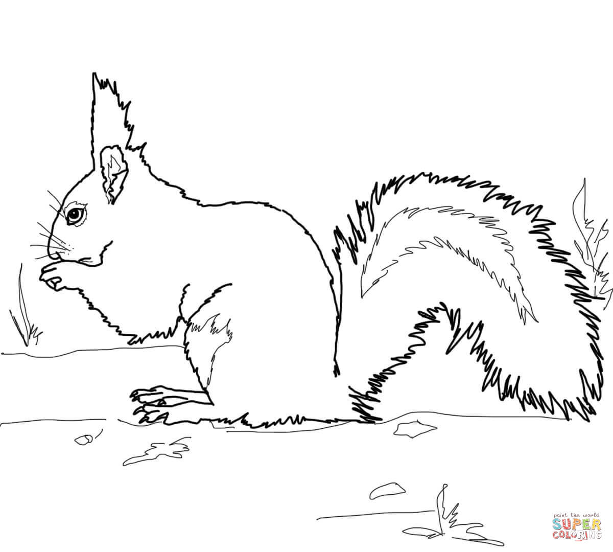 Gray Squirrel coloring #1, Download drawings