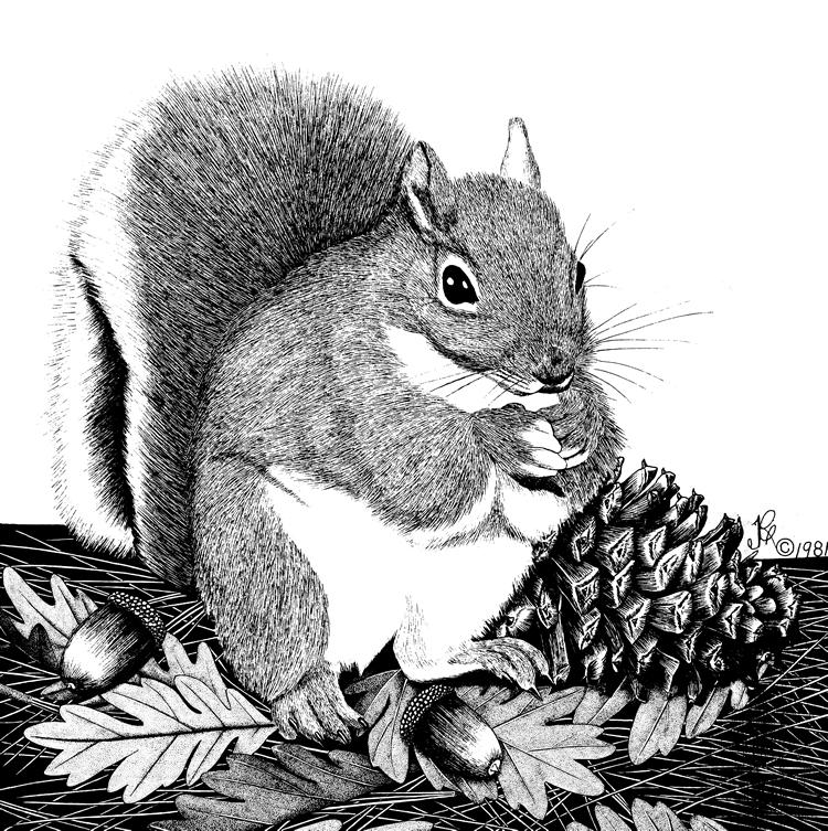 Gray Squirrel coloring #4, Download drawings