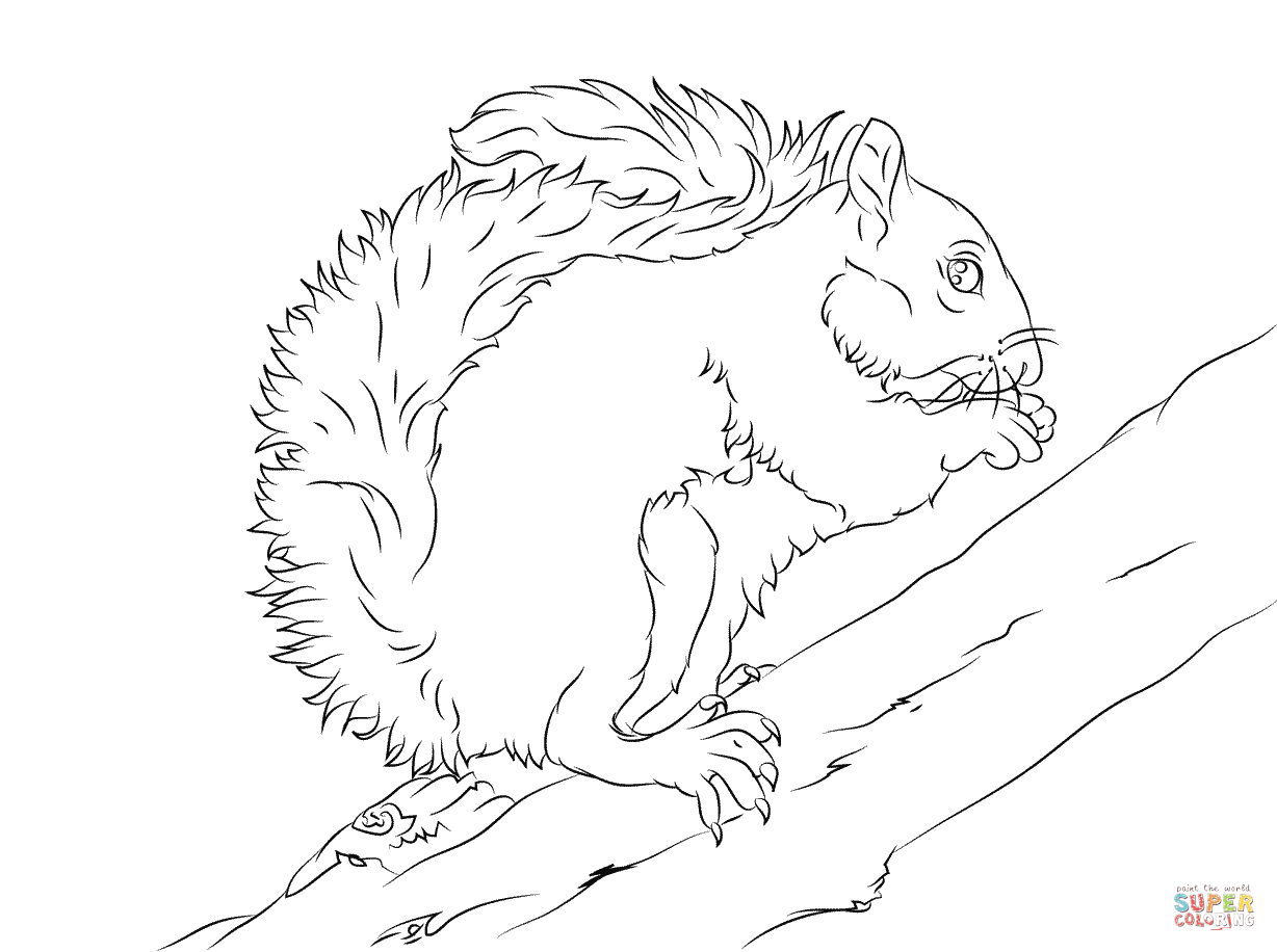 Gray Squirrel coloring #5, Download drawings