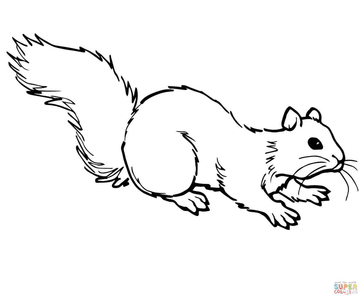 Gray Squirrel coloring #7, Download drawings