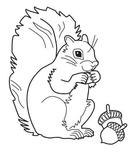 Gray squirrel coloring download gray squirrel coloring for Coloring page of a squirrel