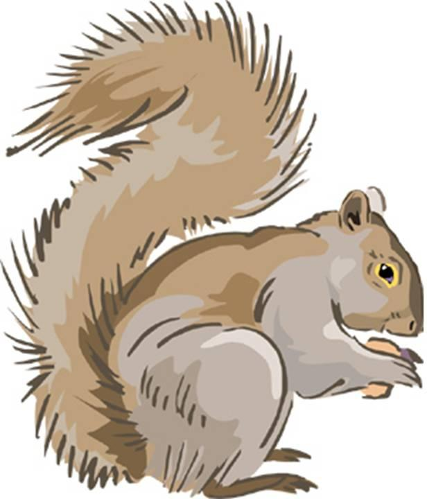 Gray Squirrel svg #7, Download drawings