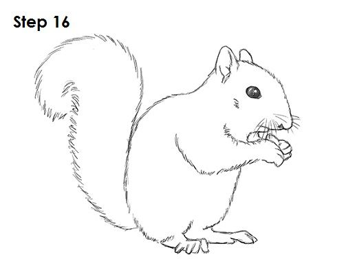 Gray Squirrel svg #8, Download drawings