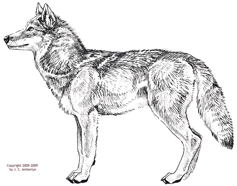 Gray Wolf svg #10, Download drawings