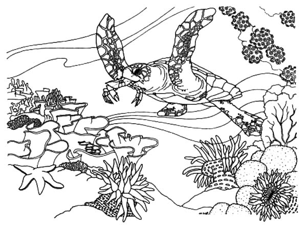 Great Barrier Reef coloring #13, Download drawings