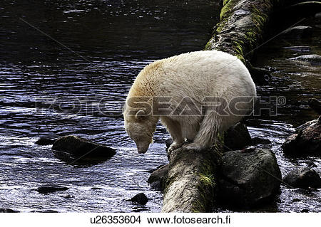 Great Bear Rainforest clipart #16, Download drawings