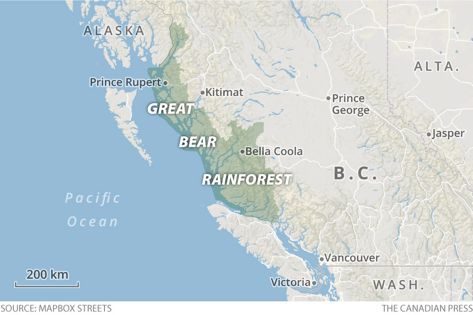 Great Bear Rainforest svg #8, Download drawings