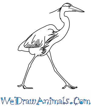 Great blue heron coloring download great blue heron coloring for Great blue heron coloring page