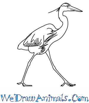 Great Blue Heron coloring #2, Download drawings