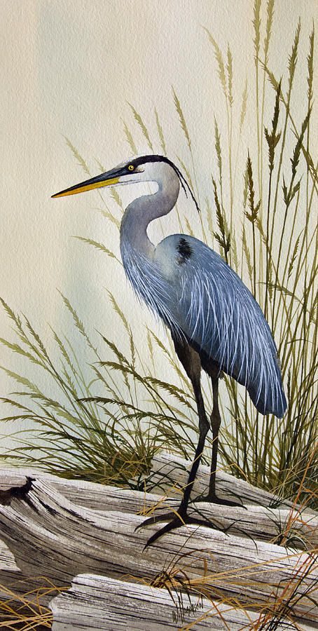 Great Blue Heron svg #4, Download drawings