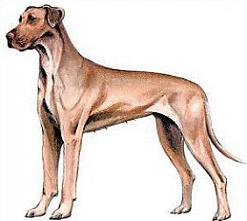 Great Dane clipart #4, Download drawings