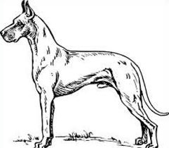 Great Dane clipart #6, Download drawings