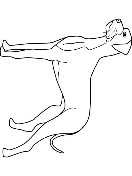 Great Dane coloring #3, Download drawings
