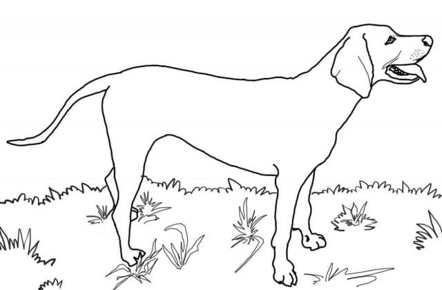 Great Dane coloring #1, Download drawings