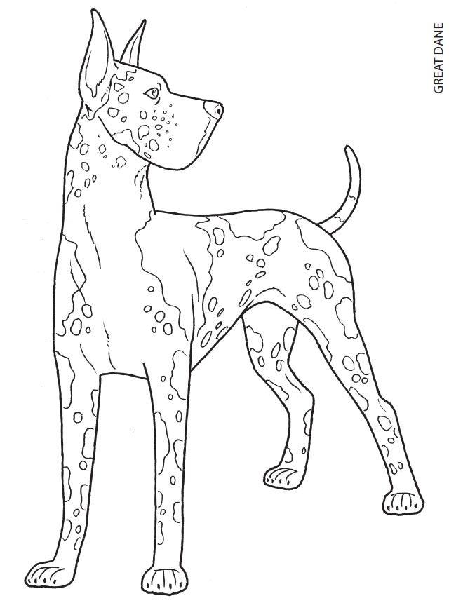 Great Dane coloring #9, Download drawings
