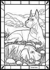 Great Dane coloring #10, Download drawings