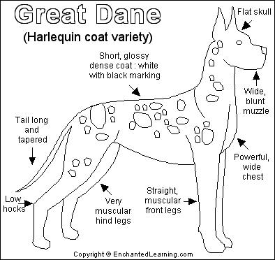 Great Dane coloring #7, Download drawings