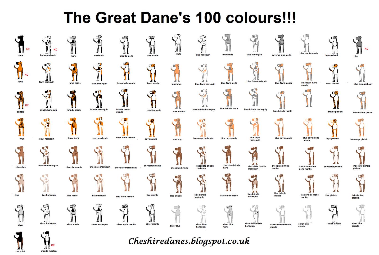 Great Dane coloring #15, Download drawings