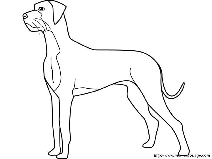 Great Dane coloring #16, Download drawings