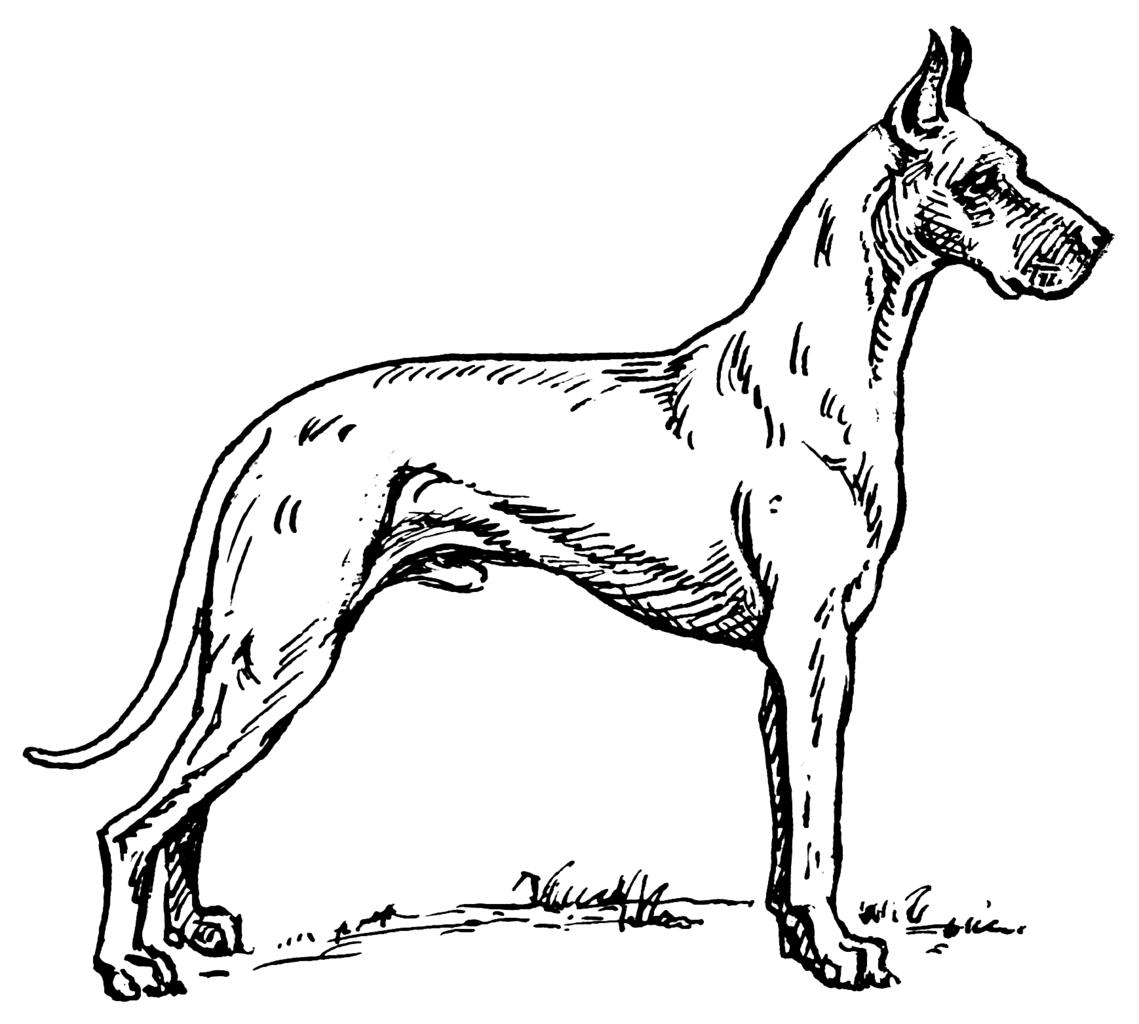 Great Dane coloring #14, Download drawings