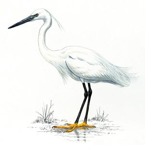 Great Egrets clipart #3, Download drawings