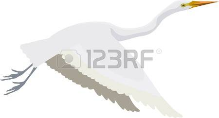 Great Egrets clipart #7, Download drawings