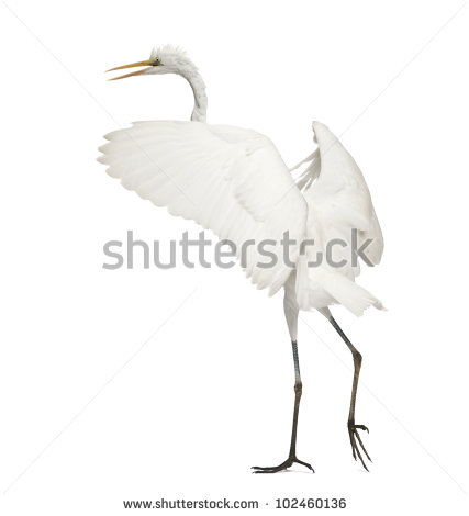 Great Egrets clipart #5, Download drawings