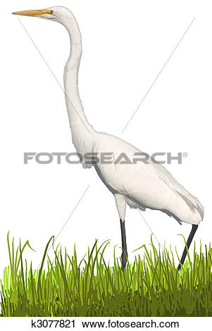 Great Egrets clipart #12, Download drawings
