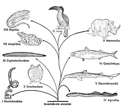 Sea Lamprey coloring #14, Download drawings