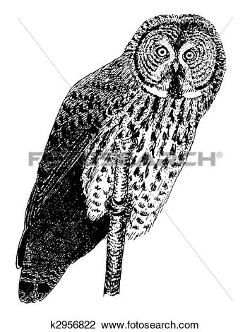 Great Gray Owl clipart #17, Download drawings