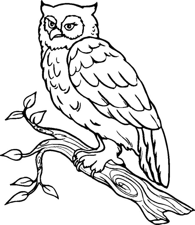 Great Gray Owl clipart #7, Download drawings