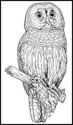 Great Gray Owl coloring #12, Download drawings