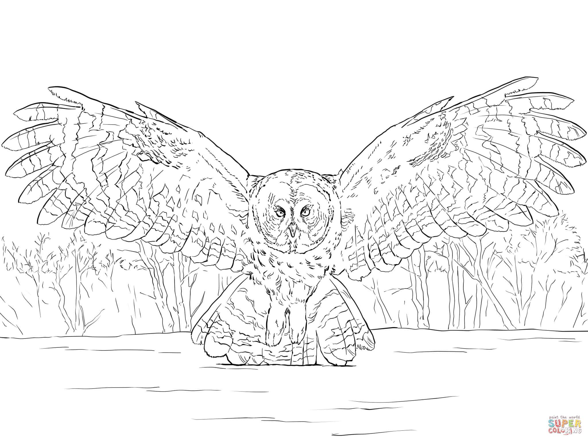 Great Grey Owl coloring #17, Download drawings