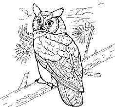 Great Gray Owl coloring #9, Download drawings