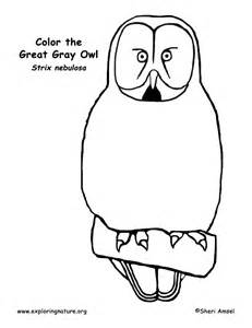 Great Gray Owl coloring #14, Download drawings