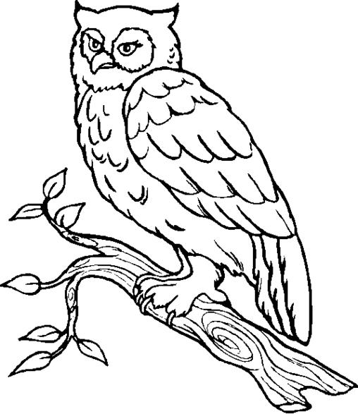 Great Gray Owl coloring #10, Download drawings