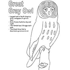 Great Grey Owl coloring #10, Download drawings