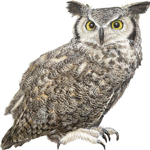 Horned Owl clipart #12, Download drawings