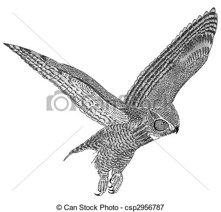 Horned Owl clipart #16, Download drawings