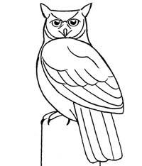 Great Grey Owl clipart #13, Download drawings