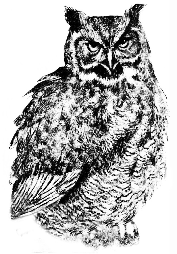 Great Grey Owl clipart #1, Download drawings
