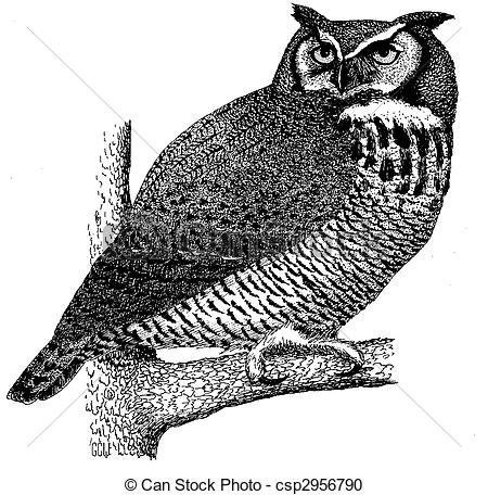 Horned Owl clipart #17, Download drawings