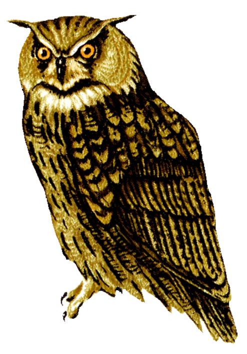 Horned Owl clipart #10, Download drawings