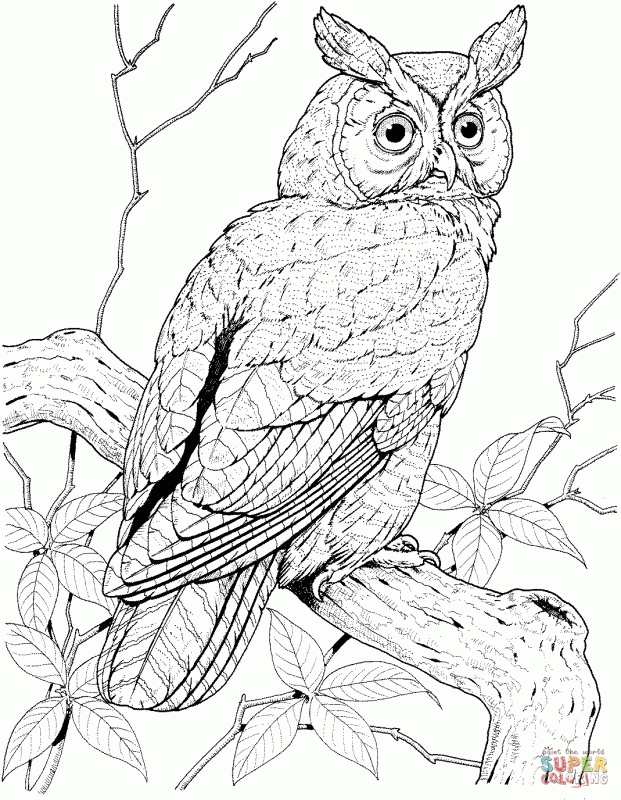 Great Horned Owl coloring #2, Download drawings