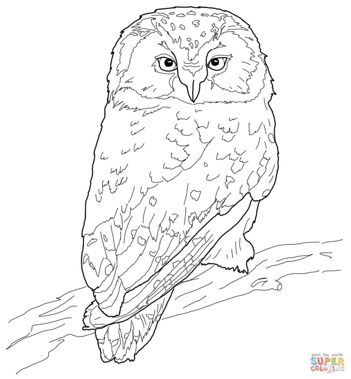 Great Grey Owl coloring #18, Download drawings